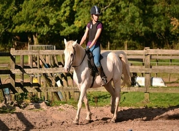 Kingsmead Equestrian Centre in Croydon